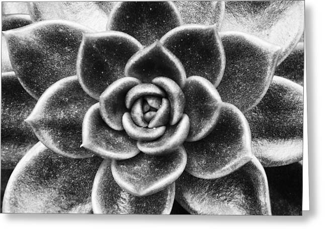 Succulent Symmetry Greeting Card