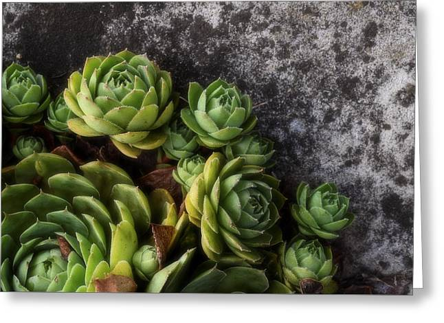 Succulent Greeting Card by Tom Druin