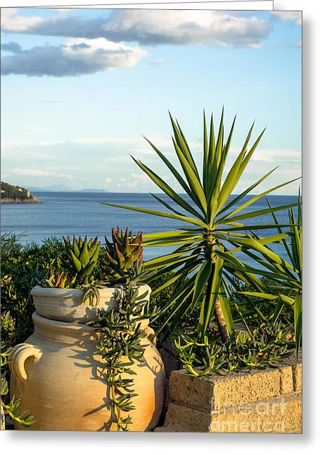 Succulents By The Sea Greeting Card