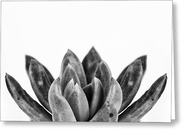 Succulents Flowers Black Greeting Card