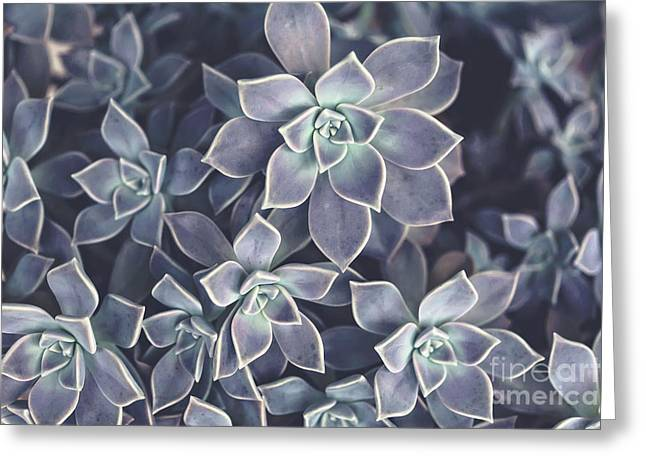 Succulents Greeting Card by Joan McCool