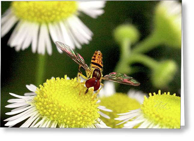 Greeting Card featuring the photograph Sugar Bee Wings by Meta Gatschenberger