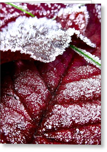 Sugar Coated Morning Greeting Card by Gwyn Newcombe