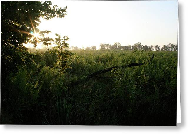 Sugar Grove Day Break Greeting Card by Dylan Punke