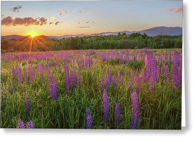 Sugar Hill New Hampshire Lupine Greeting Card by Bill Wakeley