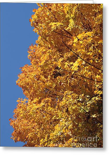 Sugar Maple And Blue Sky Greeting Card