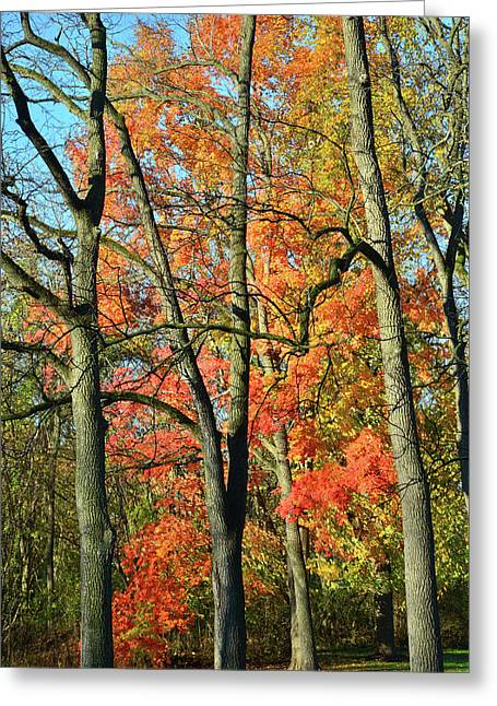 Greeting Card featuring the photograph Sugar Maple Brilliance by Ray Mathis