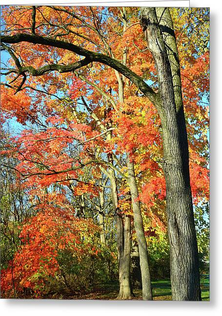 Greeting Card featuring the photograph Sugar Maple Stand by Ray Mathis