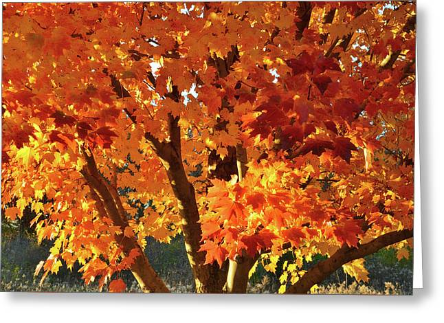 Greeting Card featuring the photograph Sugar Maple Sunset by Ray Mathis