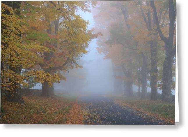 Sugar Maples On A Misty Country Road Greeting Card by John Burk