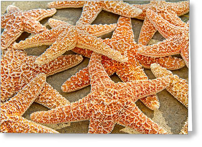 Ocean Creatures Greeting Cards - Sugar Starfish Greeting Card by Betsy A  Cutler