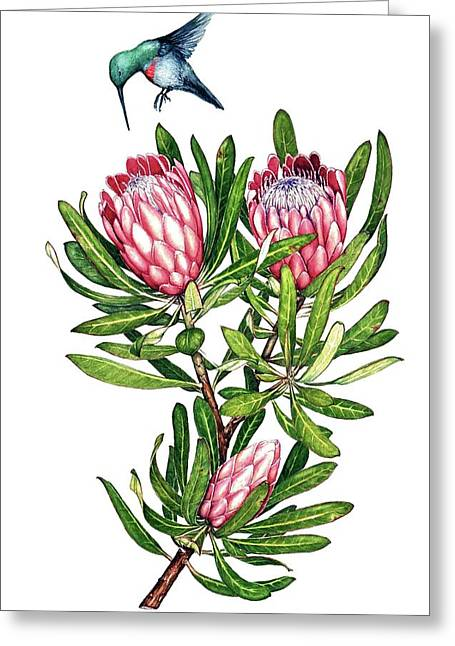 Greeting Card featuring the painting Sugarbush And The Humming Bird by Heidi Kriel