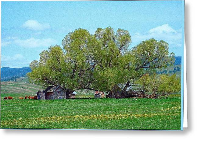 Sula Montana Homestead Revisited Greeting Card by Robert Morrissey