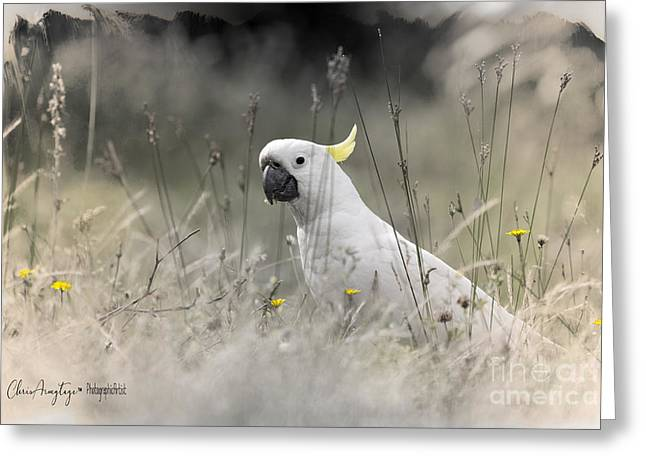 Greeting Card featuring the photograph Sulphur Crested Cockatoo by Chris Armytage