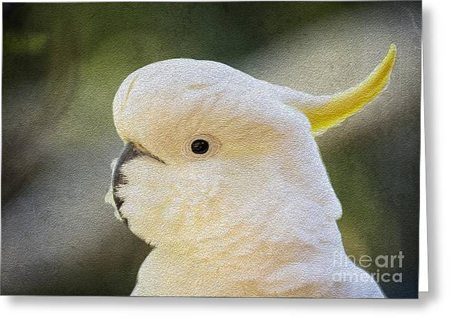 Sulphur Crested Cockatoo Greeting Card by Avalon Fine Art Photography