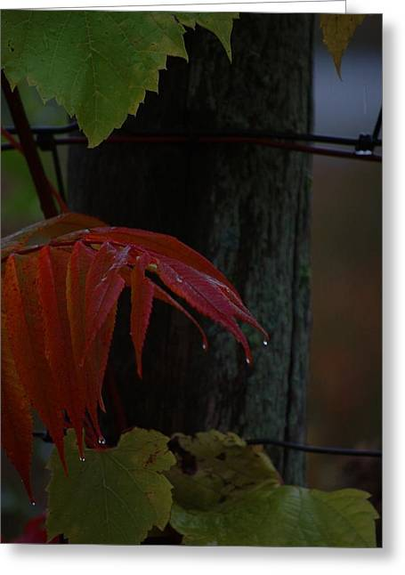Grape Leaves Greeting Cards - Sumac Greeting Card by The Stone Age