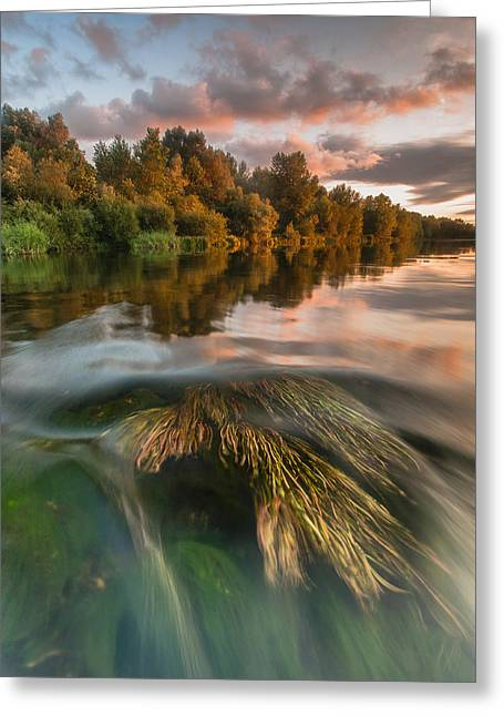 Reflections Greeting Cards - Summer afternoon Greeting Card by Davorin Mance