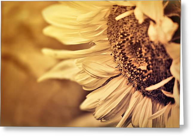 Greeting Card featuring the photograph Summer Afternoon by Douglas MooreZart