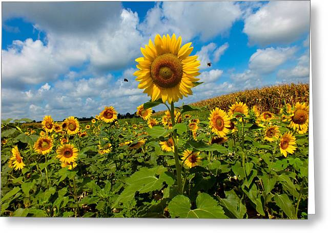 Summer At The Farm Greeting Card