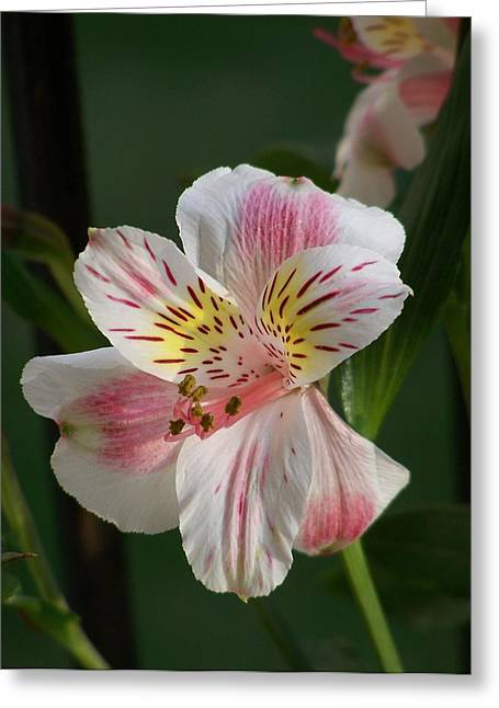 Summer Bloom I Greeting Card by Jake Hartz