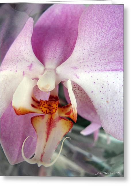Greeting Card featuring the photograph Summer Bloom by Joan  Minchak