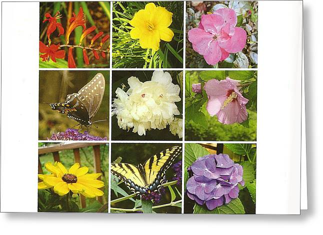 Greeting Card featuring the photograph Summer Botanical Collage by Margie Avellino