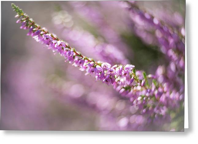 Summer Breezes Through The Heather Greeting Card