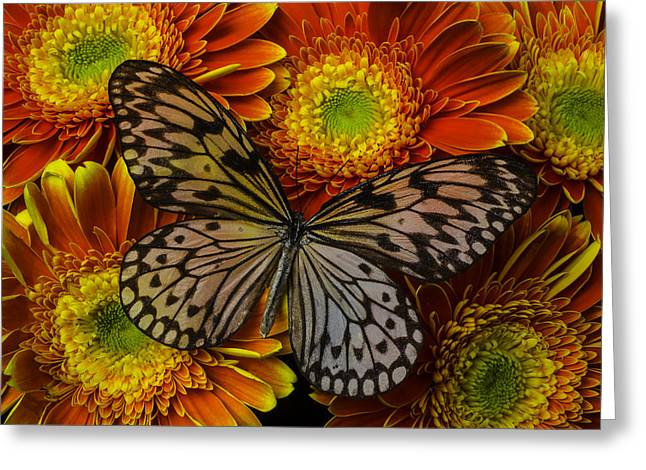 Summer Butterfly Greeting Card