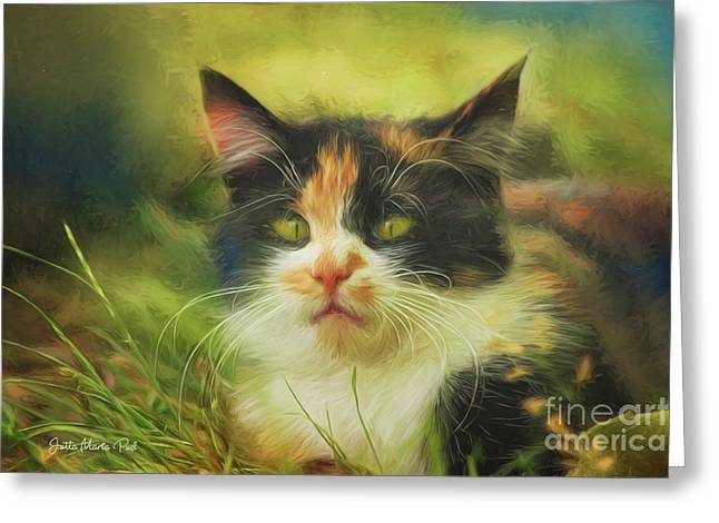 Greeting Card featuring the photograph Summer Cat by Jutta Maria Pusl