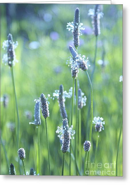 Summer Charm Greeting Card