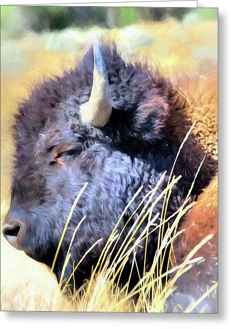 Summer Dozing - Buffalo Greeting Card by Greg Sigrist