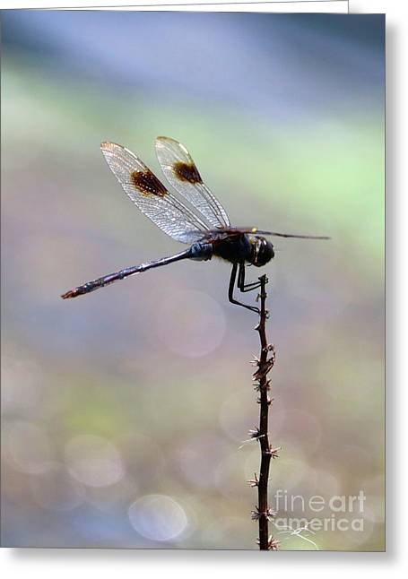 Summer Dragonfly With Sparkling Pond Greeting Card