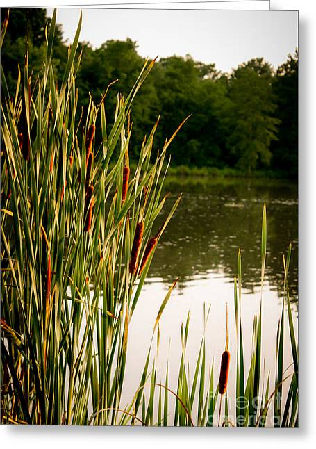 Summer Evening On The Pond Greeting Card by Jim Raines