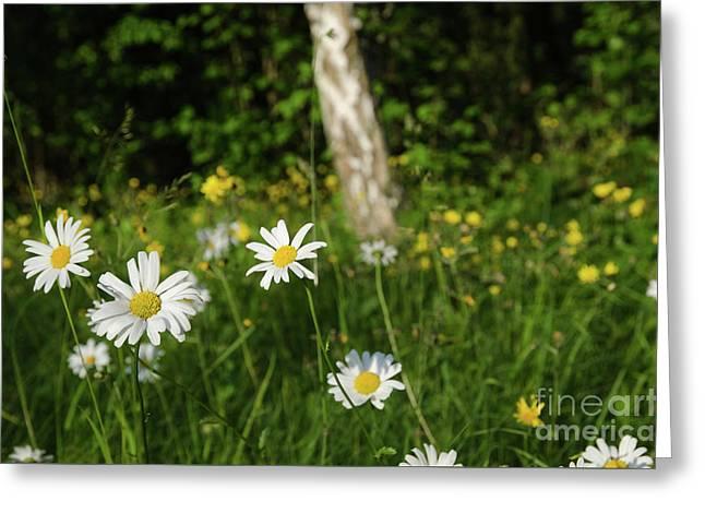 Greeting Card featuring the photograph Summer Feeling by Kennerth and Birgitta Kullman