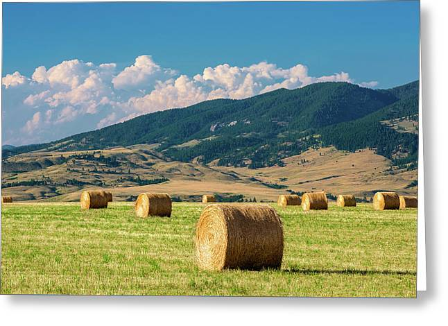 Summer Fields Greeting Card by Todd Klassy