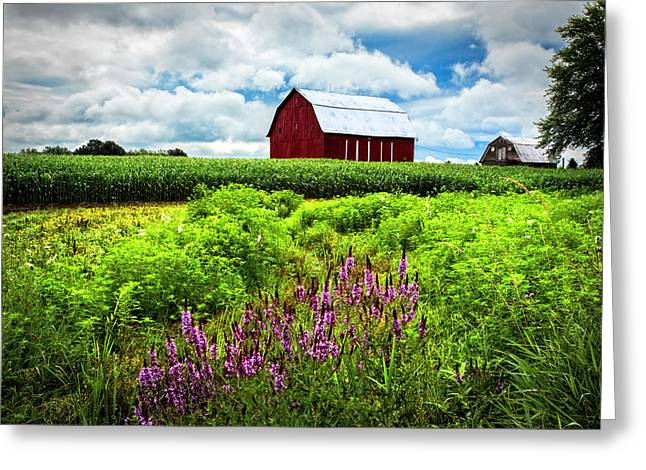 Summer Flowers In The Fields Greeting Card by Debra and Dave Vanderlaan