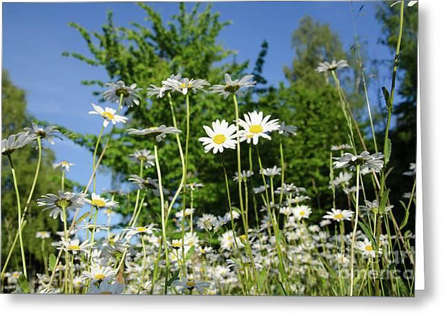Greeting Card featuring the photograph Summer Flowers by Kennerth and Birgitta Kullman