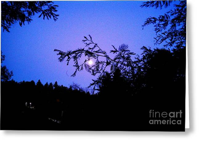 Summer Full Moon Greeting Card by Garnett  Jaeger