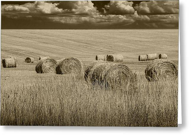 Summer Harvest Field With Hay Bales In Sepia Greeting Card