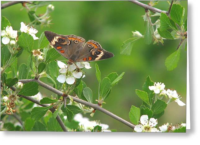 Greeting Card featuring the photograph Summer Haw In Spring by Peg Urban