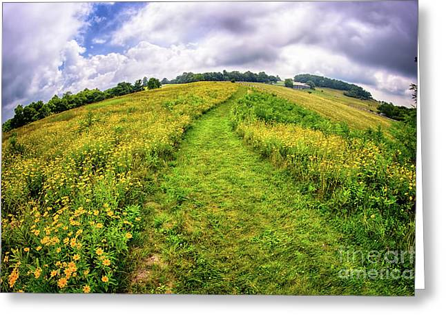Greeting Card featuring the photograph Summer Hike Through Blue Ridge Flowers by Dan Carmichael