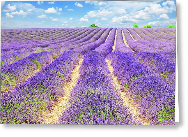Summer In Provence Greeting Card by Anastasy Yarmolovich