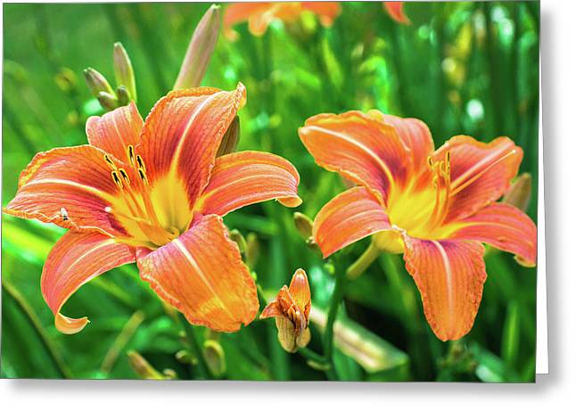 Greeting Card featuring the photograph Summer Jubilation by Bill Pevlor