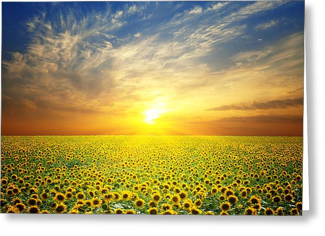 Summer Landscape Beauty Sunset Over Sunflowers Field Greeting Card by Caio Caldas