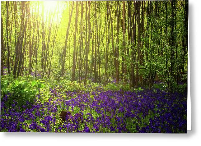 Summer Light Greeting Card by Martin Newman