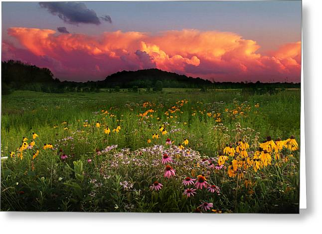 Summer Majesty Greeting Card by Rob Blair