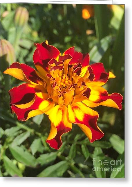 Summer Marigold Greeting Card