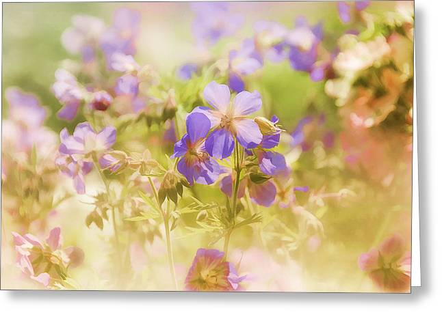 Summer Meadow Greeting Card by Elaine Manley
