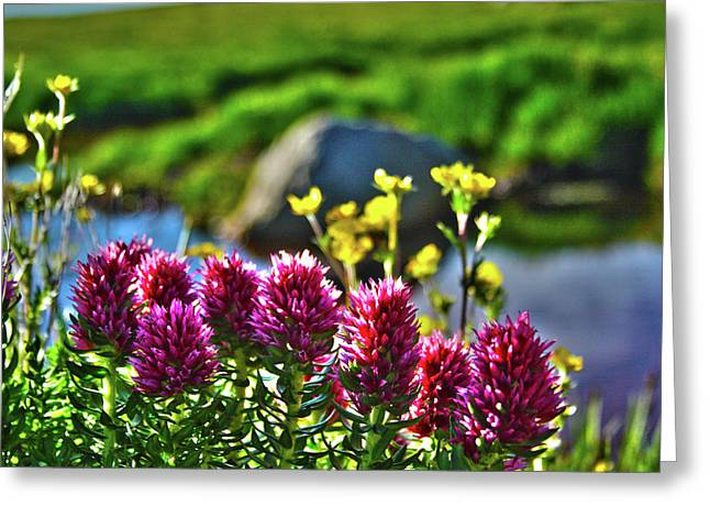Greeting Card featuring the photograph Summer Morning Blossoms by Marie Leslie