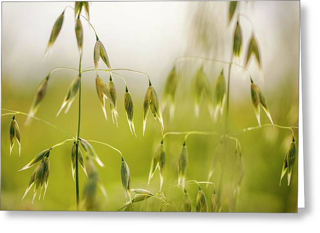 Summer Oat Greeting Card